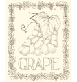 Grape and Leaves vector image vector image