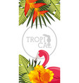 tropical black background vector image