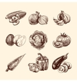 Vegetables sketch set vector image vector image