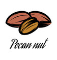 color of a pecan nut vector image