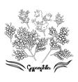 Graphic gypsophila set vector image vector image
