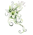 Watercolor white lilies vector image