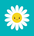white daisy chamomile with face head cute flower vector image