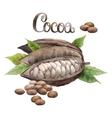 Watercolor cocoa fruit vector image