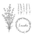 botanical bundle vector image vector image