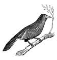 Mockingbird vintage engraving vector image vector image
