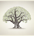 old olive tree vector image
