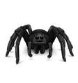 scary tarantula vector image