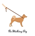 Akita Inu with a leash - dog asian breed on white vector image
