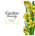 daffodil flower and leaves border drawing vector image