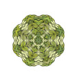 green mandala with outline circle shape on white vector image vector image