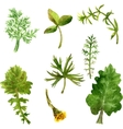 Set of watercolor drawing herbs and leaves vector image