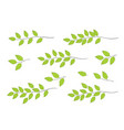 tree branches with green leaves vector image