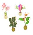 tropical plants in pot amaryllis tillandsia vector image