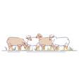 flock sheeps on pasture flat livestock vector image vector image
