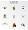 realistic spider damselfly insect and other vector image