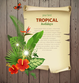 tropical banner vector image vector image