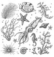 underwater plants and animals sketch vector image