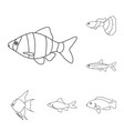 different types of fish outline icons in set vector image vector image