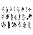 set of black branches and herbs vector image vector image