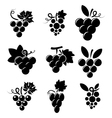 icons of grapes vector image