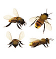 bee realistic wildlife insect honeybee fly danger vector image vector image