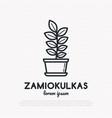 succulent zamiokulkas in pot thin line icon vector image vector image