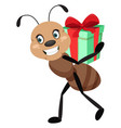 ant holding present on white background vector image vector image