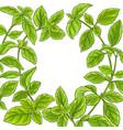 basil plant frame vector image