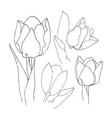 hand drawn set of tulips flowers flower isolated vector image