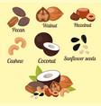 piles of different nuts pistachio peanut walnut vector image vector image