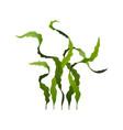 spirulina seaweed healthy food undersea algae vector image vector image