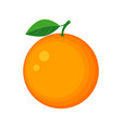 colorful juicy orange fruit vector image vector image