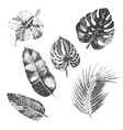 hand drawn tropical plants and exotic vector image