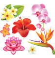 Set of tropical flowers vector image vector image
