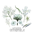 Watercolor gypsophila set vector image vector image