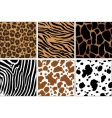 animal skin prints vector image vector image