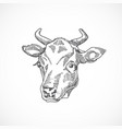 cow face hand drawn abstract vector image