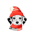 dalmatian puppy in red hat with pompon and scarf vector image