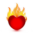 heart in fire flames icon logo vector image