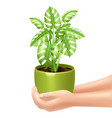 Holding A Houseplant vector image vector image