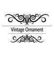 vintage contour pattern vector image vector image