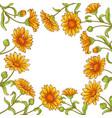 calendula flower frame vector image vector image