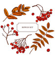 collection of hand drawn rowan berry vector image vector image