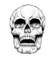 human skull image vector image vector image