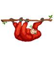 A red orangutan vector image vector image