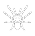 tarantula spider Brachypelma smithi spider female vector image