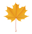 Autumn yellow gold maple leaf isolated vector image vector image