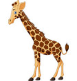 cartoon giraffe isolated on white background vector image vector image