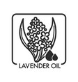 lavender oil drops and flower plant graphic art vector image vector image